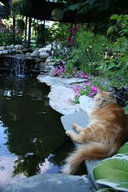 16 best backyard koi pond images on pinterest koi ponds fish