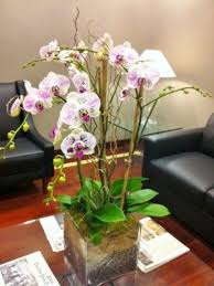 Orchid Plants Orchid U0026 Plants Delivery From A Miami Florist Shop