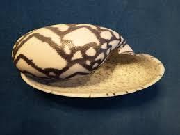 modelling sea shells imaginary