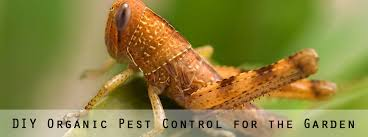 Gardening Pest Control - organic pest control for your garden