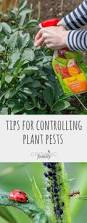 Insecticide For Vegetable Garden by Best 25 Garden Pests Ideas On Pinterest Identify Bugs