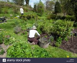 When To Plant Spring Vegetable Garden by People Gardening In The Vegetable Garden In May In Spring Sunshine