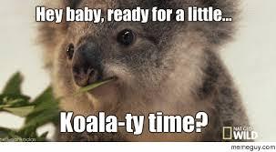 Koala Meme - smooth koala meme guy
