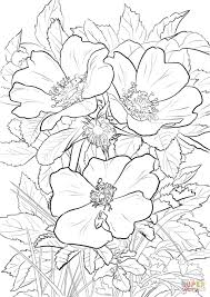 wild prairie rose coloring page free printable coloring pages