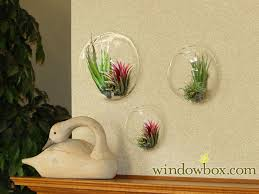 wall terrarium wall hanging terrarium windowbox com