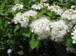 Best Flowers For Weddings Appmon