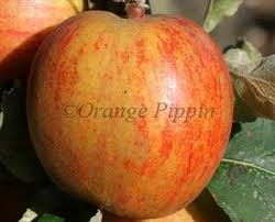 Online Fruit Trees For Sale - ribston pippin apple trees for sale buy online friendly advice