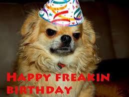 Birthday Dog Meme - dog birthday meme happy birthday dog meme 3 maggie s board 3