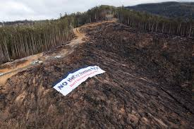Russian Boreal Forest Disturbance Maps by Deforestation And The Taiga With Images Edanielsen Storify