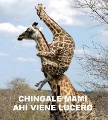 Lucero Meme - los mejores memes sobre lucero