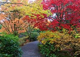 Botanical Garden Bellevue Seattle Fall Colors Fall Color At The Yao Japanese Garden In The