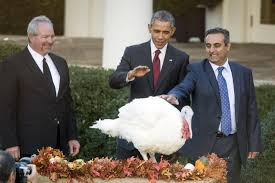 obama pardons thanksgiving turkey obama pardons turkeys u0027honest u0027 and u0027abe u0027 at white house upi com