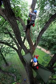 go climb a tree winnipeg free press