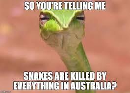 So You Re Telling Me Meme - 20 weird snake memes sayingimages com