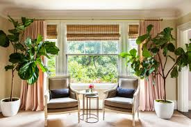 fiddle fig trees twoinspiredesign