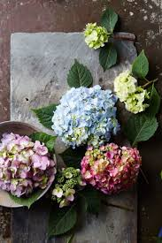 garden and flower show 3596 best gardening trends images on pinterest gardening flower