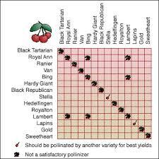 cherry pollination http extension missouri edu p g6001 next