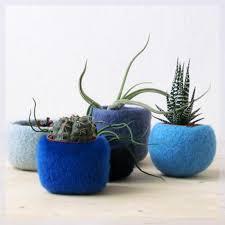 blue home decor succulent planters air plant display modern