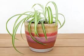 good luck plants for office in barcelona studio lagranja have