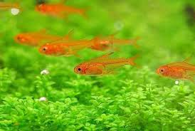 Most Beautiful Aquascapes The 10 Best Aquascaping Fish Aquarium Info