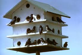 martin bird house plans free escortsea