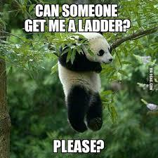 Panda Meme Mascara - pandas are white black asian lazy fat hairy and use mascara