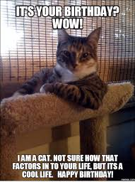 Funny Cat Birthday Meme - e sits your birthday wow ama cat not sure how that factors in to
