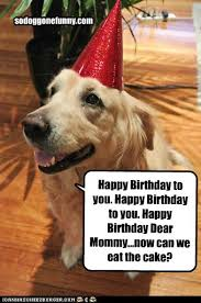 dog birthday quotes tag for dog funny birthday litle pups birthday