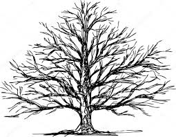 Oak Tree Drawing Oak Tree U2014 Stock Vector Chronicler101 43425037