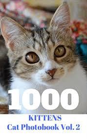 Cute Kittens Meme - 1000 kittens cat photobook vol 2 1000 pic cat photobook very