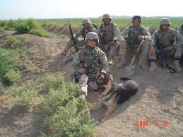 belgian shepherd navy seals 2007 best soldiers man and dog images on pinterest military