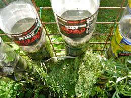container gardens for sale home outdoor decoration