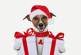 pet christmas gift guide for dogs