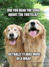 Dog Jokes Meme - funny golden retriever tortilla joke meme postcard humor animal