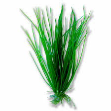 Aquarium Tropical Plants Plastic Aquarium Fish Tank Plant Fake Tropical Plants Grass