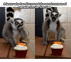 Lemur Meme - a lemur who has discovered the wondrousness of cupcakes for the