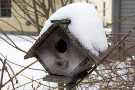 Winter House Safe And Easy Shelter For Winter Birds