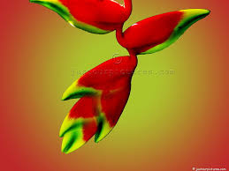 Tropical Flowers And Plants - pictures of tropical flowers and plants just our pictures of