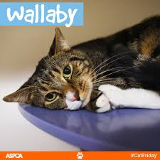 black friday at t better than black friday don u0027t miss cat friday at the aspca