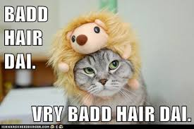 Bad Hair Day Meme - grammar catz grammar cat 66 bad hair day cat