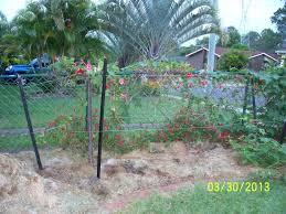 forum rasberry bushes