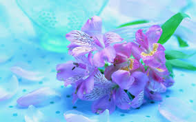 purple and blue flowers flowers beauty blue nature pink flowers beautiful pretty purple