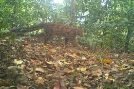 forests november 2017 browse articles shreya dasgupta conservation