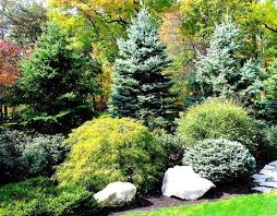 Landscaping Ideas For Privacy Best 25 Privacy Landscaping Ideas On Pinterest Privacy Trees