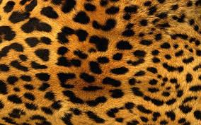 leopard wallpapers android apps on google play