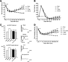 keratan sulfate restricts neural plasticity after spinal cord