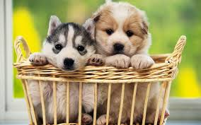 cute dog wallpapers dog full hd wallpaper and background image 1920x1200 id 379691