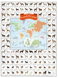 Map Of The World Poster by Dogs Of The World Map Dog Breed Poster Dogs Of The World