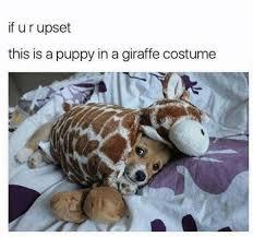 Meme Giraffe - puppy in a giraffe costume meme xyz