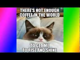 Meme Grumpy Cat - top 50 funniest and best grumpy cat memes youtube